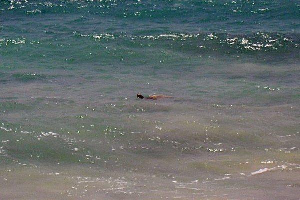 Riu Karamboa - Schildkröten in Strandnähe