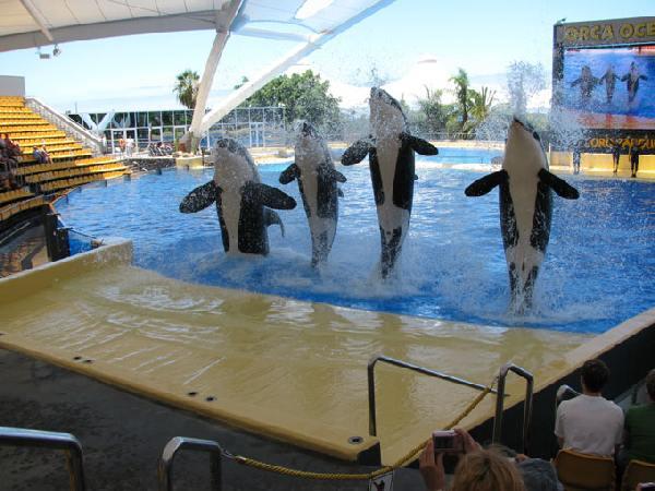 Loro Park, Teneriffa, Orca Ocean Show