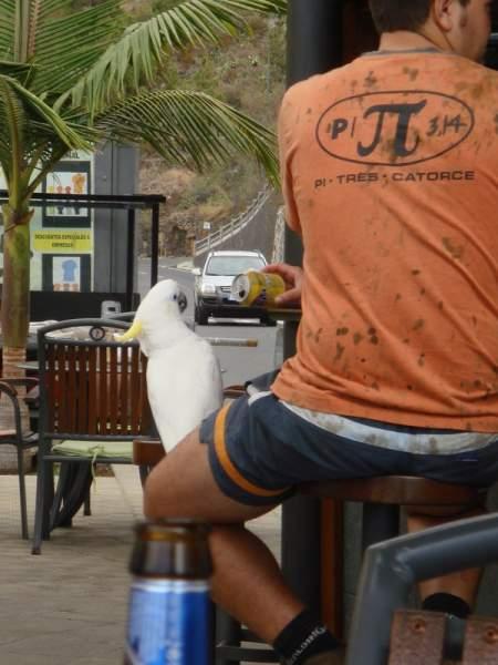 Restaurant Kiosco El Diablo, Tijarafe / La Palma