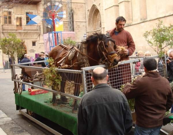 Beneides de Sant Antoni -Tiersegnung in Palma Januar 2014
