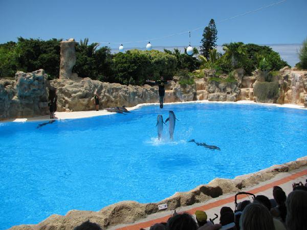 Loro Park, Teneriffa, Delphin Show
