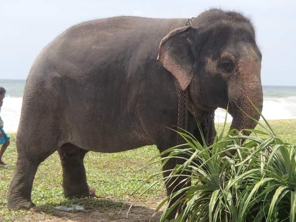 RIU Sri Lanka - September 2016