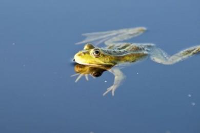 Für Naturliebhaber gibt es kaum schönere Geräusche als das Plätschern des Wassers und das Quaken von Fröschen und Kröten