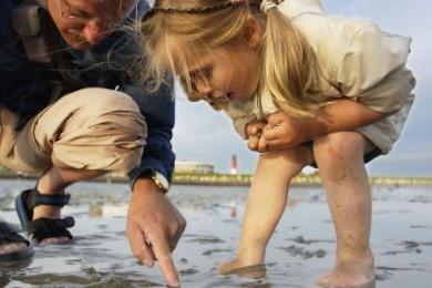 Die riesige Artenvielfalt des Wattenmeers fasziniert nicht nur die Kinder.