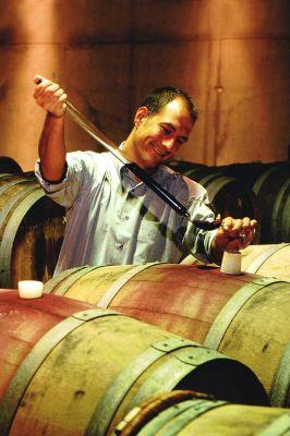 Hier hat der Rebensaft eine große Tradition: Der Weinanbau im Elbtal feiert 2011 bereits seinen 850. Geburtstag.