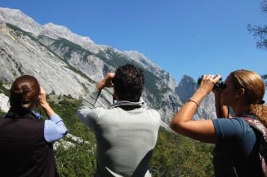 Mit leistungsstarken Ferngläsern kann man auch scheue Alpentiere in ihrem natürlichen Lebensraum beobachten.