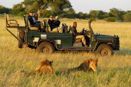 Safari - Löwen